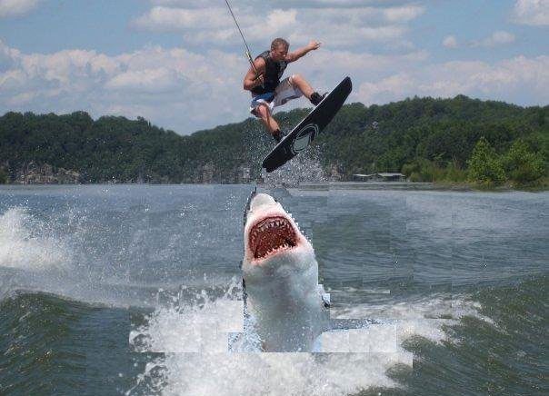 [Image: shark.jpg]