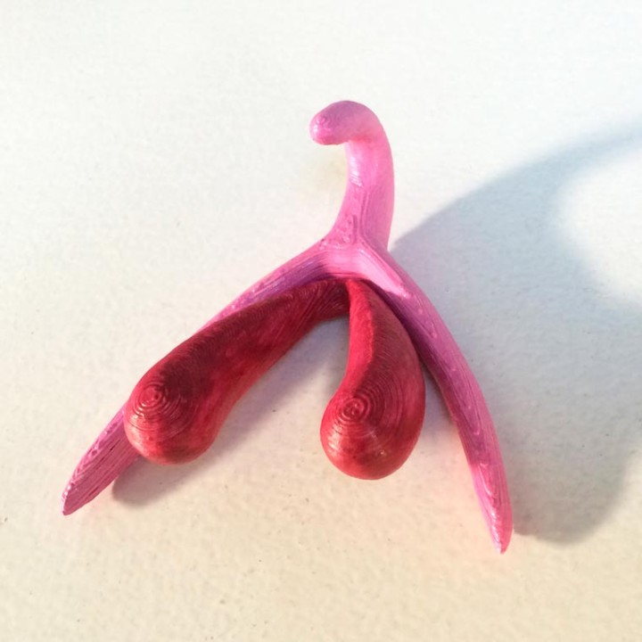 3D-printed-clitoris-5