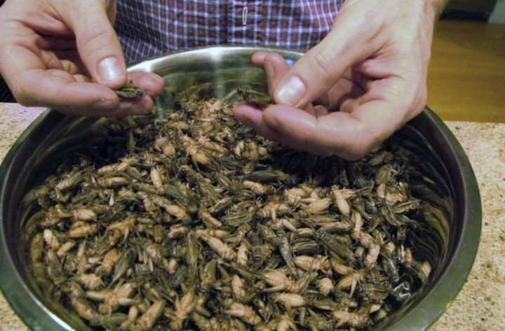 BC-US-Food-and-Farm-Edible-Crickets-IMG-jpg-768x505