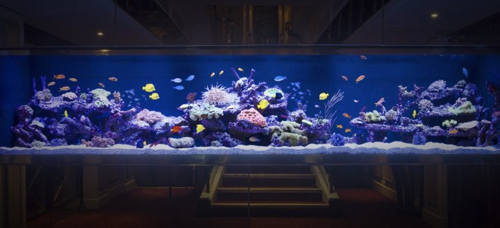 hackers steal casino info through lobby aquarium thermometer