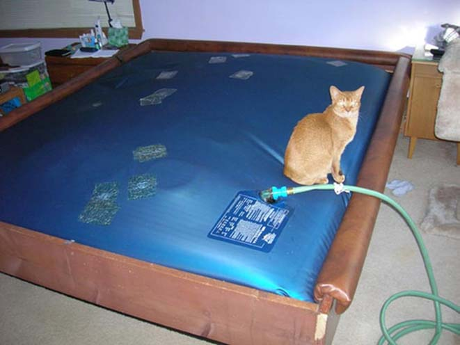 Sex On A Waterbed