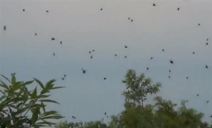 Spider rain (Small)