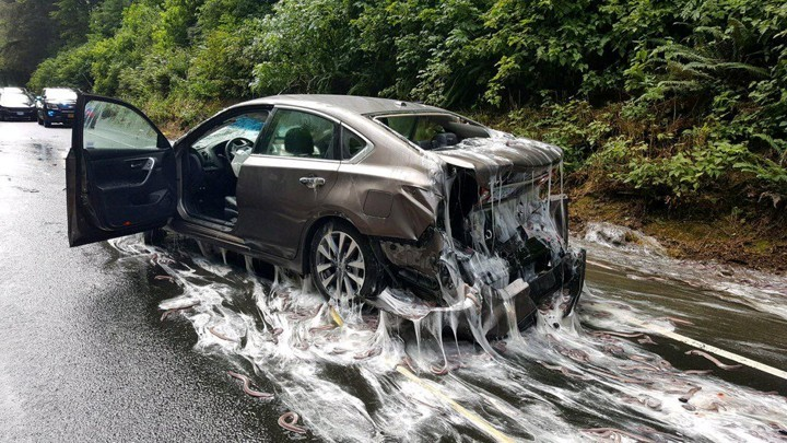 Slime eels, otherwise known as Pacific hagfish, cover Highway 101 after a flatbed truck carrying them in tanks overturned near Depoe Bay, Oregon, U.S. July 13, 2017.  Oregon State Police/Handout via REUTERS  ATTENTION EDITORS - THIS IMAGES WAS PROVIDED BY A THIRD PARTY     TPX IMAGES OF THE DAY - RC133762F7D0