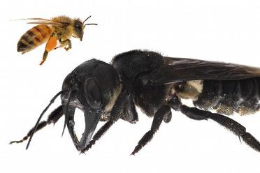 Following the Big Bee