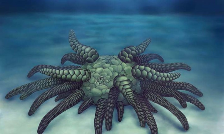 1-cthulhufossi