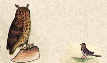 owl n-gale