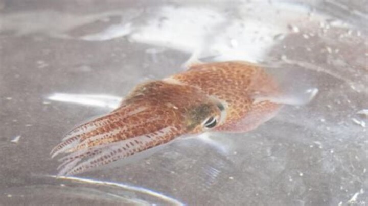 space squid (Small)